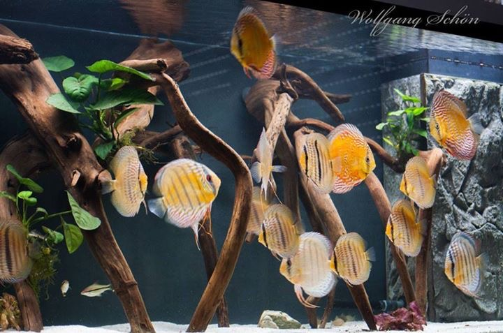 Design with driftwood and minimal plants.
