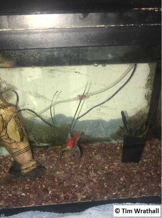 Billy the Fish in his Aquarium
